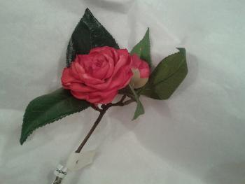 Fleurs SIA camélia